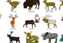 صورة أنواع الحيوانات هي