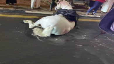 صورة إصابة حصان وتلف مقدمة مركبة بعد حادث سير في هدا الطائف