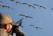 صورة الكشف عن أنواع جديدة من الطيور مسموح بصيدها ببنادق الساكتون حتى 20 أكتوبر.. وطريقة الحصول على ترخيص