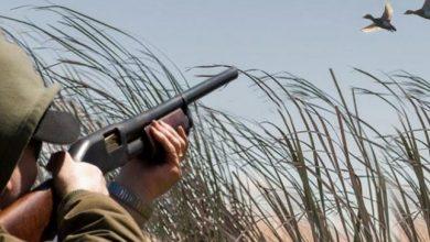 صورة تعرف على الطيور المسموح بصيدها بالبنادق الهوائية حتى 20 أكتوبر القادم.. وطريقة الحصول على ترخيص