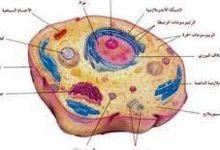 صورة ما هي أهم مكونات الخلية؟