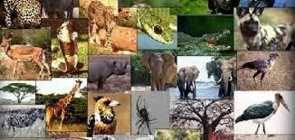 صورة ما هي الوظائف الخمس الاساسيه للمخلوقات الحيه