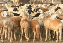 صورة ما هي اسباب قلة الثروة الحيوانية؟