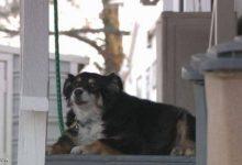 صورة كلبة ترث 5 ملايين دولار.. ماذا عنك كم ورثت؟