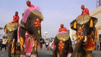 صورة زفاف جماعي على ظهور الأفيال إبتهاجاً بعيد الحب