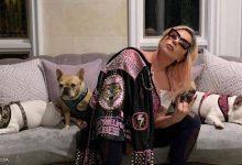صورة بعد جائزة النصف مليون دولار.. ليدي غاغا تستعيد كلبيها