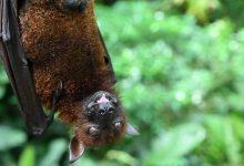 صورة الصحة العالمية تحذر من انتقال أمراض جديدة من الحيوانات للبشر