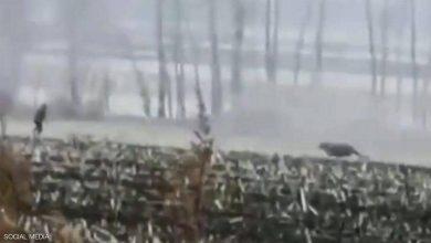 صورة بالفيديو: نمر ينقض على رجل ويحطم نافذة سيارة