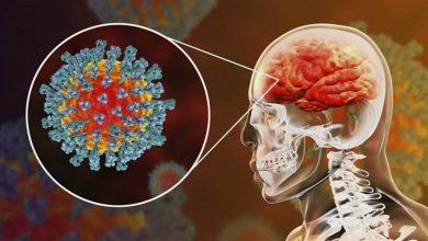 صورة كيف يصل فيروس كورونا إلى الدماغ؟