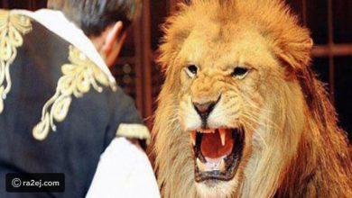 صورة شاهد: أسد يفترس صاحبه بالسعودية