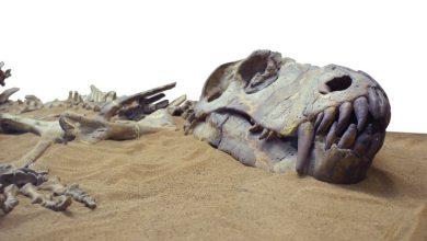 صورة أسباب انقراض الدينصورات