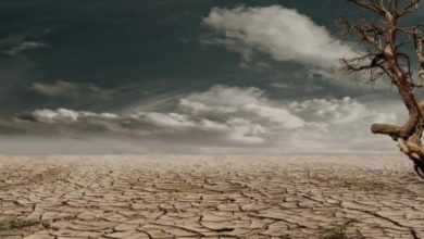 صورة لماذا لا تمتص الأرض الدماء ؟