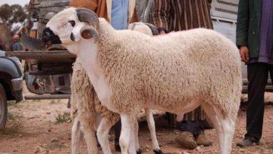 صورة دعاء الذبح في عيد الأضحى