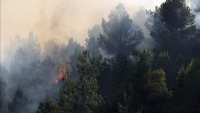 صورة بعد عمليات إطفاء استمرت 52 ساعة.. السيطرة على حرائق قرب القدس