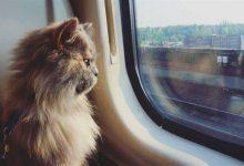 صورة هل يُسمح بنقل الحيوانات في القطارات؟ الخطوط الحديدية السعودية تجيب