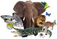 صورة أي مما يلي ينتمي الى الحيوانات الثابتة درجة الحراره