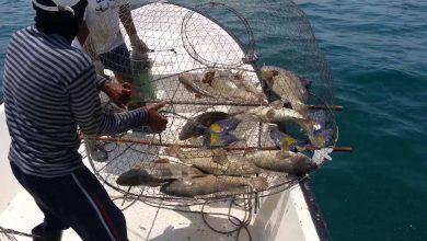 صورة الصيد هو قتل الحيوان ال ## غير المقدور على ذبحه اول متوسط