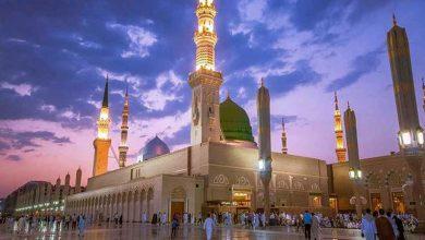 صورة لماذا تدخل الاسود المسجد النبوي اخر الزمان