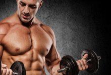صورة في حال نفاذ الجزيئات الغنية بالطاقة من العضلات فإن العضلة