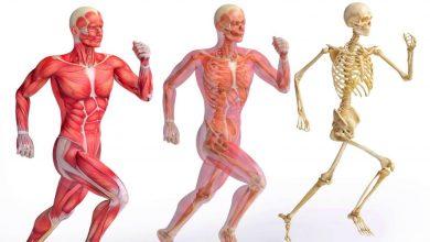 صورة المفاصل الثابتة في الإنسان ثاني متوسط