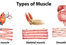 صورة كيف احافظ على العضلات الملساء