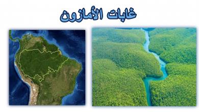 صورة اين تقع غابات الأمازون