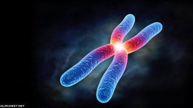صورة تنفصل الكروموسومات بعضها عن بعض خلال الانقسام المتساوي في الطور ثالث متوسط