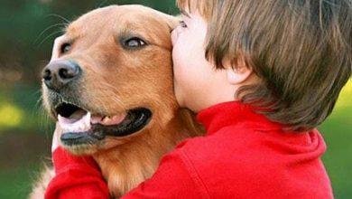 صورة هل يجوز تربية الكلاب في المنزل وما حكم ملامستها