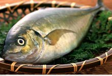 صورة ما الخاصية التي تتمتع بها خياشيم الأسماك لزيادة فاعلية استخلاص الأكسجين من الماء؟