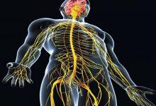 صورة ما هو الجهاز المكون من الدماغ والحبل الشوكي