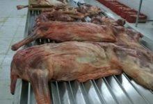 صورة حكم اكل لحم الحمار